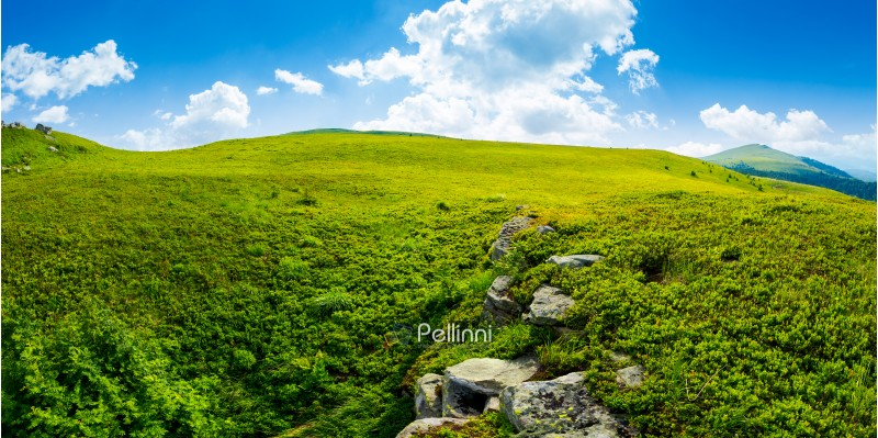 panorama of the hillside meadow. lovely summer landscape with boulders among the grass. location Runa mountain, Ukraine