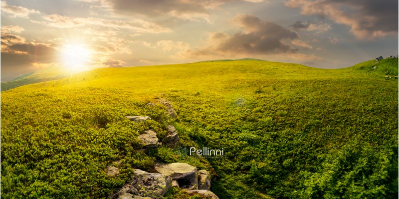 panorama of the hillside meadow at sunset. lovely summer landscape with boulders among the grass. location Runa mountain, Ukraine