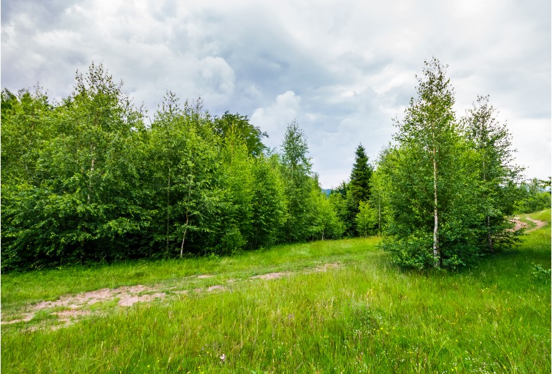 path through forested grassy meadow. beautiful summer nature scenery