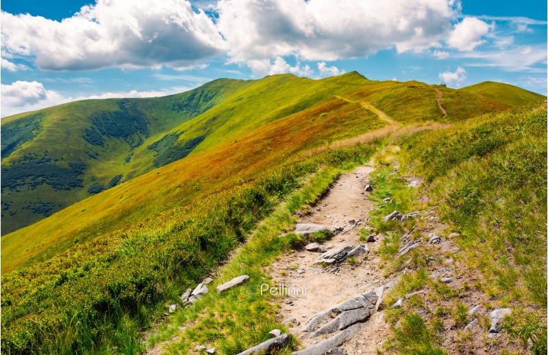 path to the top of the mountain. beautiful summer landscape. great destination to travel. location Velykyi Verkh peak of Borzhava ridge in Carpathian mountains, Ukraine