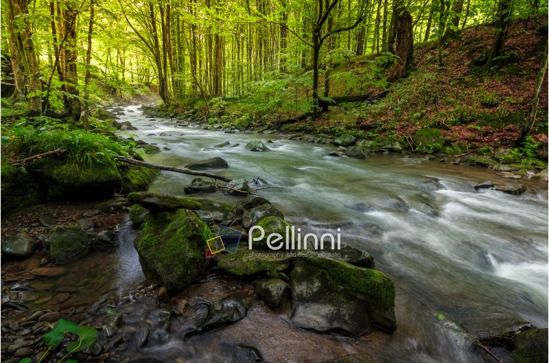 river flow in sunny forest at sunrise.  stones covered with moss lay on the shore. beautiful summer background