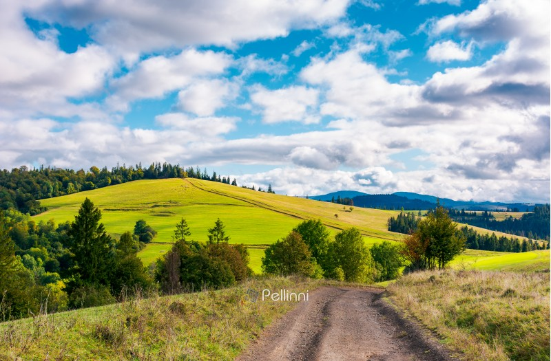 road through grassy meadow on a forested hill. lovely nature scenery under the cloudy sky