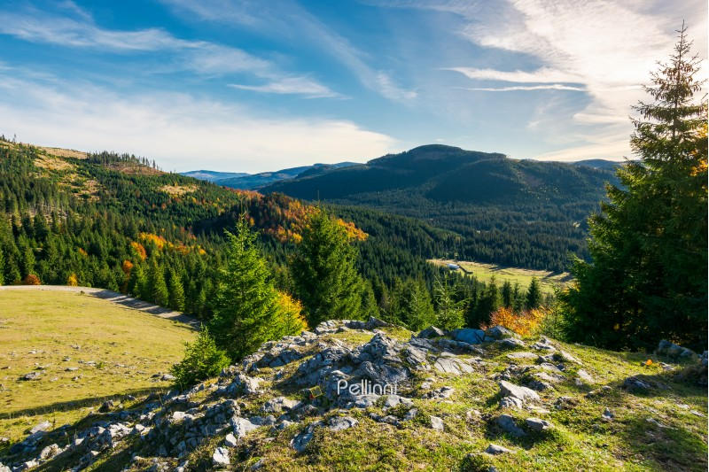 rocky cliff above the forested valley. beautiful autumn sunrise in mountainous landscape.