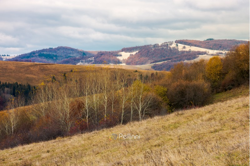lovely landscape in mountains. row of naked trees on a hill with weathered grass. overcast sky above the distant mountain with snow or frost on hills