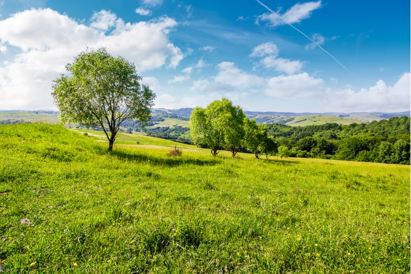 row of trees on grassy slope. lovely countryside in summer