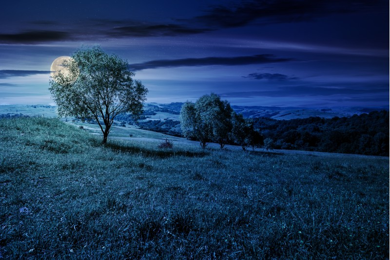 row of trees on grassy slope at night in full moon light. lovely countryside in summer