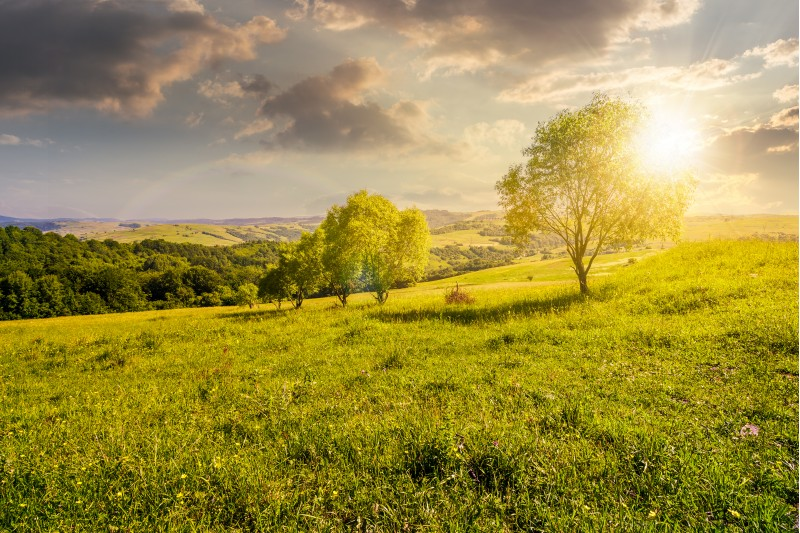 row of trees on grassy slope at sunset. lovely countryside in summer