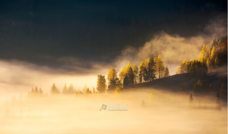 row of trees on hillside in rising fog. gorgeous scenery in mountains at sunrise. inspiring mood and colors