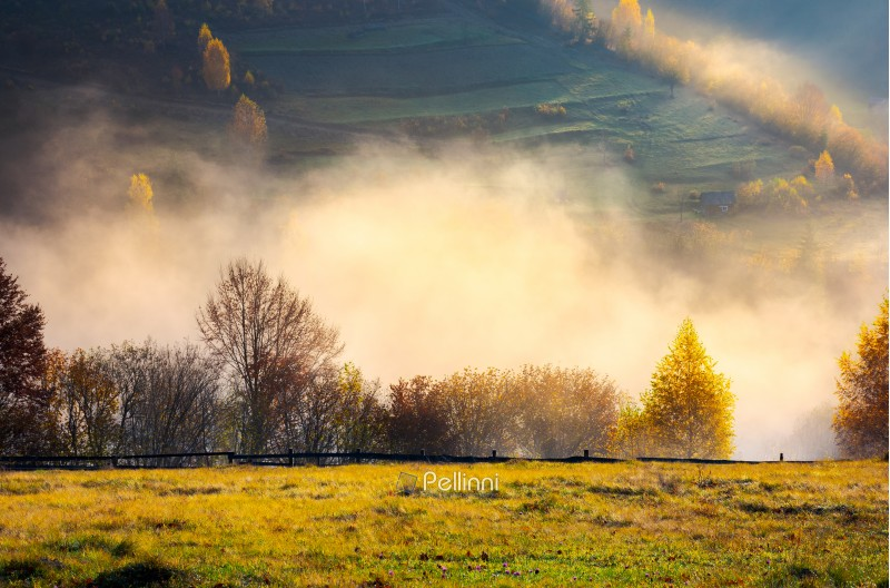 row of trees on the meadow in morning autumn fog. beautiful background of forested rolling hill in the distance.