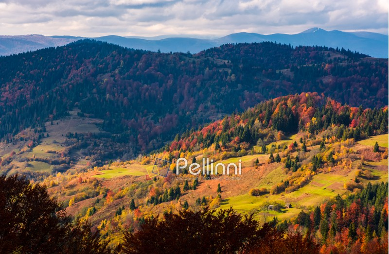 rural fields on hills among the forest in autumn. beautiful mountainous countryside landscape