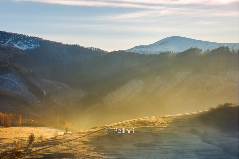 rural hill in glowing fog. beautiful autumn scenery in mountainous area with snowy peaks in the distance. november sunny weather
