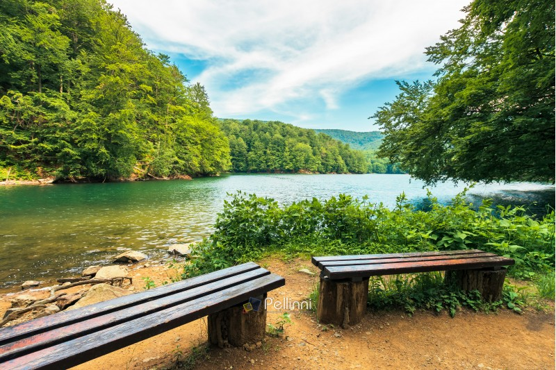scenic view of the lake among beech forest. wooden benches on the shore. sunny afternoon summer weather with fluffy clouds on the sky. beautiful nature background