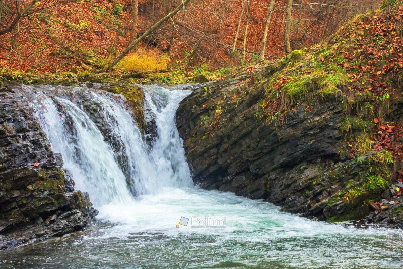 small forest waterfall in autumn. beautiful nature scenery on the river. clear water, fallen foliage and moss on the boulders