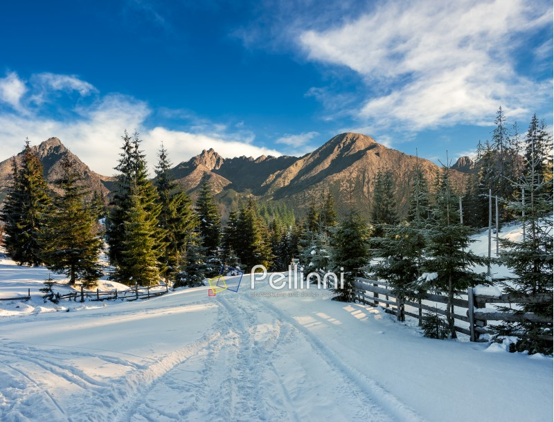 winter mountain landscape. road that leads into the pine forest covered with snow