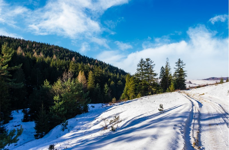 snowy slopes and forested hills. beautiful nature scenery in winter Carpathians