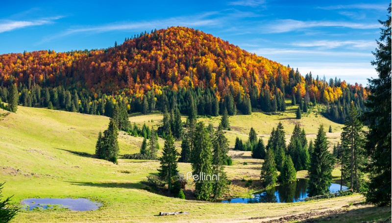splendid autumn landscape on a bright day. spruce trees on hill around the pond. forest in colorful foliage on a distant mountain