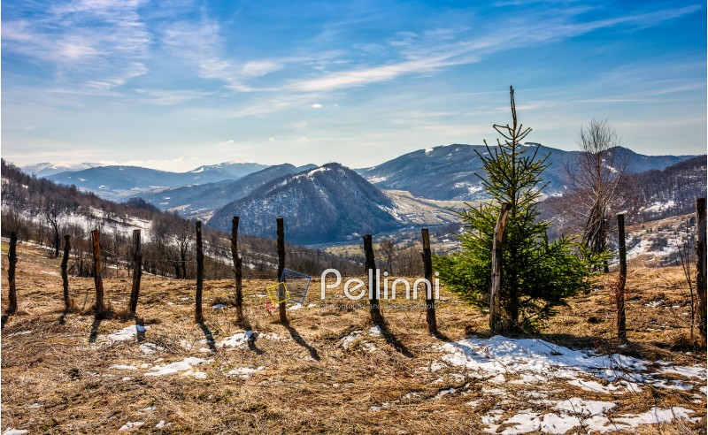 spring has sprung in rural area. wooden fence on agricultural field, yellow weathered grass covered with snow. snowy peaks of mountain ridge in the distance. nature on sunny day under blue sky