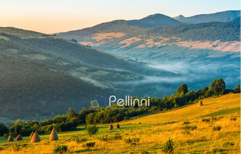 agricultural field on a hillside with haystacks on a green grassy meadow. beautiful summer morning in foggy mountains. Carpathian rural area.