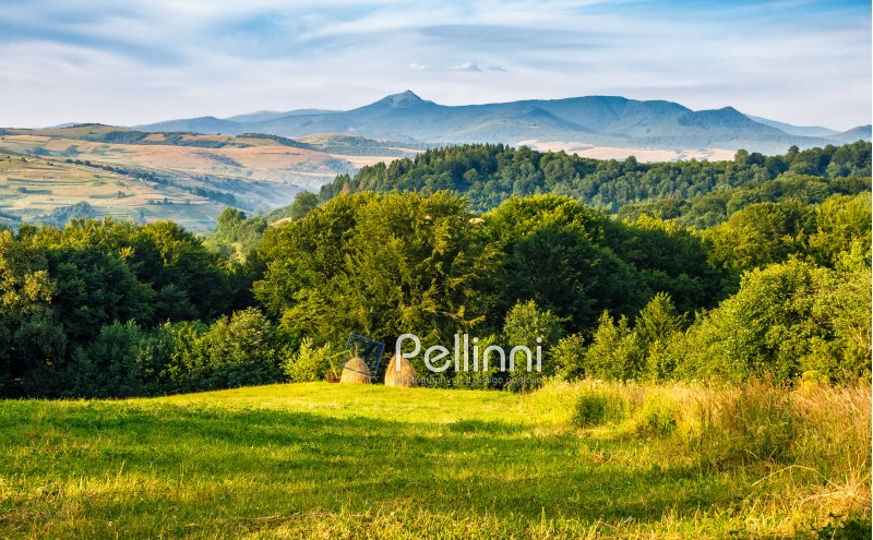 agricultural field on a hillside with haystacks on a green grassy meadow. beautiful summer morning in mountains. Carpathian rural area.