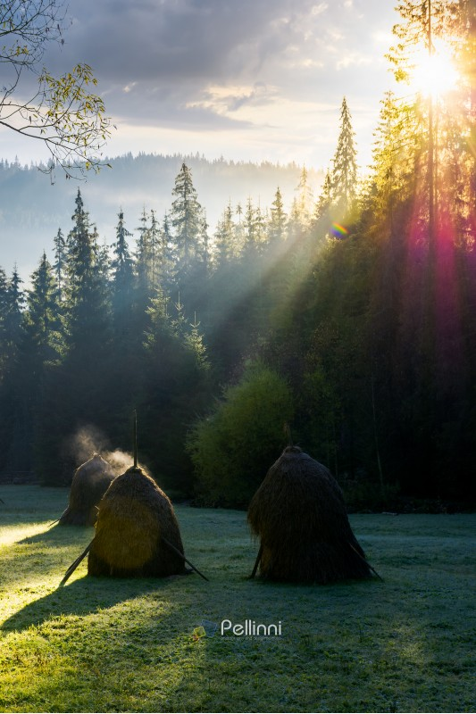 steaming haystack in the forest at sunrise. rare rural background