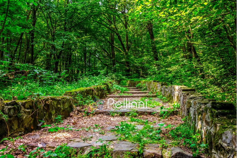 path with steps made ​​of stone among the trees in a city park is covered with foliage