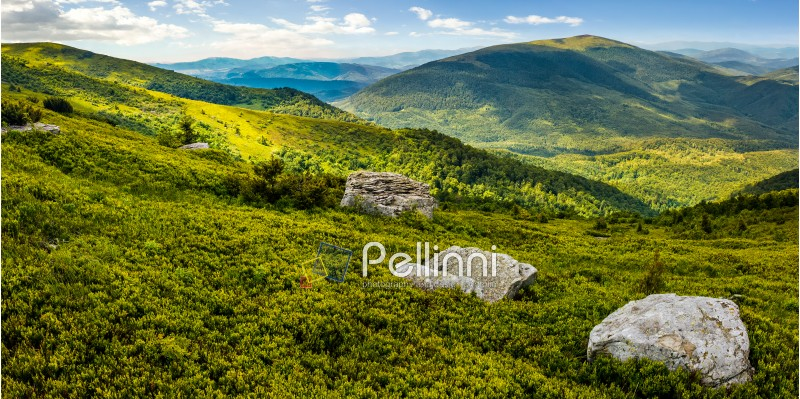 huge stones among the grass on top of the hillside meadow near the edge of a mountain. vivid summer panoramic landscape.