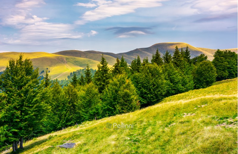 summer landscape with forested hills. beautiful scenery of Svydovets mountain ridge, Ukraine