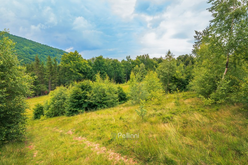 summer scenery on a cloudy day in mountains. meadow on hillside near the forest. mixed beech, spruce and birch forest. path down the hill. overcast sky.