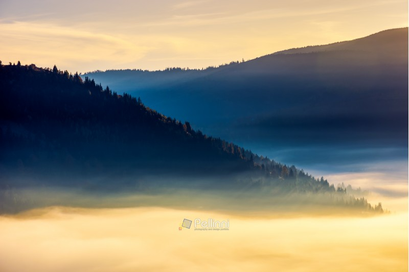 thick fog above the valley at sunrise. beautiful autumn background in mountains. lovely nature abstract scenery