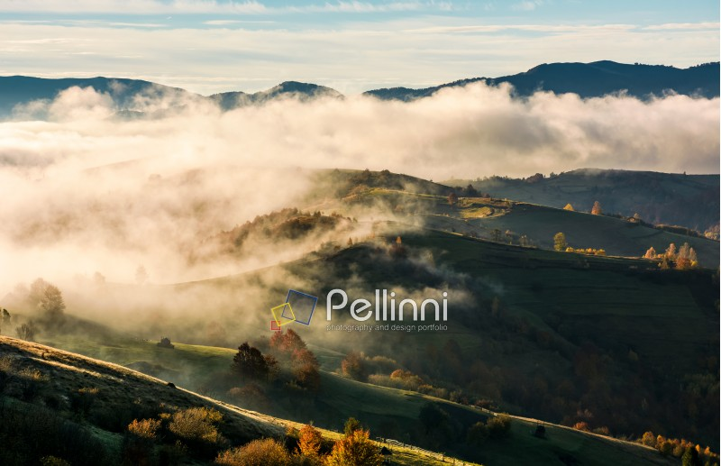 thick fog over the rolling hill in autumn. amazing mountainous countryside landscape at sunrise