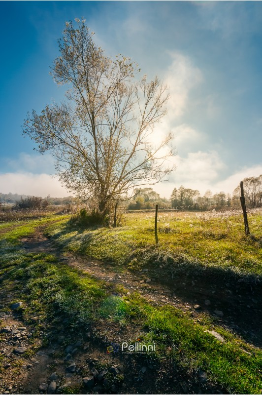 tree by the road in morning light. green grass and plants in hoar. fog rise in to the blue sky in the distance