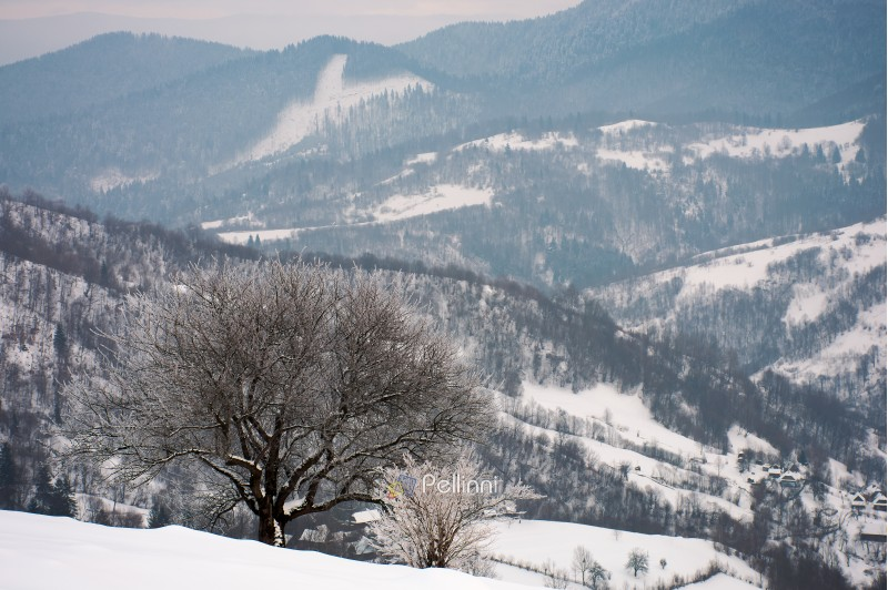 tree in hoarfrost on a snowy slope. beautiful winter landscape in mountains on a gloomy day