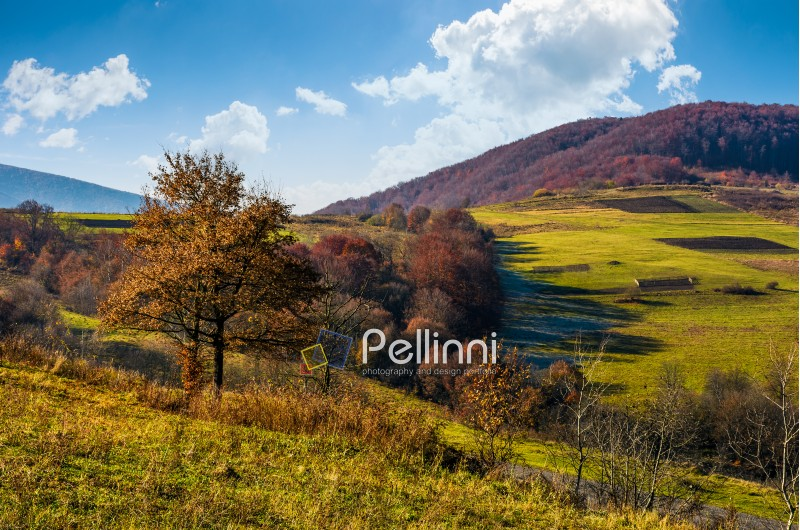 tree on hillside in late autumn countryside. forest with red foliage on a beautiful sunny day in mountainous rural area