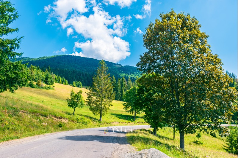 trees along the country road in mountains. lovely summer scenery on a sunny day