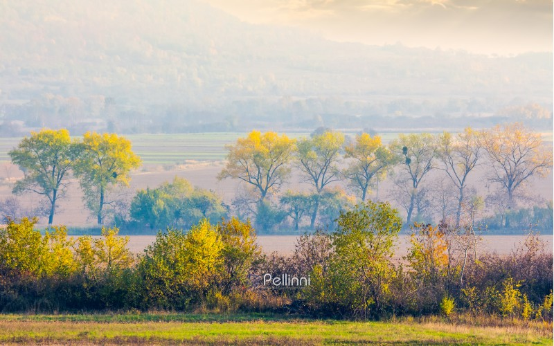 trees along the rural fields in morning haze. lovely agriculture scenery in autumn. forested hill in the distance. beautiful countryside background