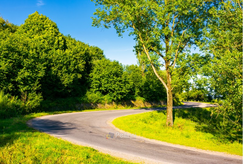 trees by the serpentine road in mountains. beautiful nature scenery in mountainous area. lovely transportation background