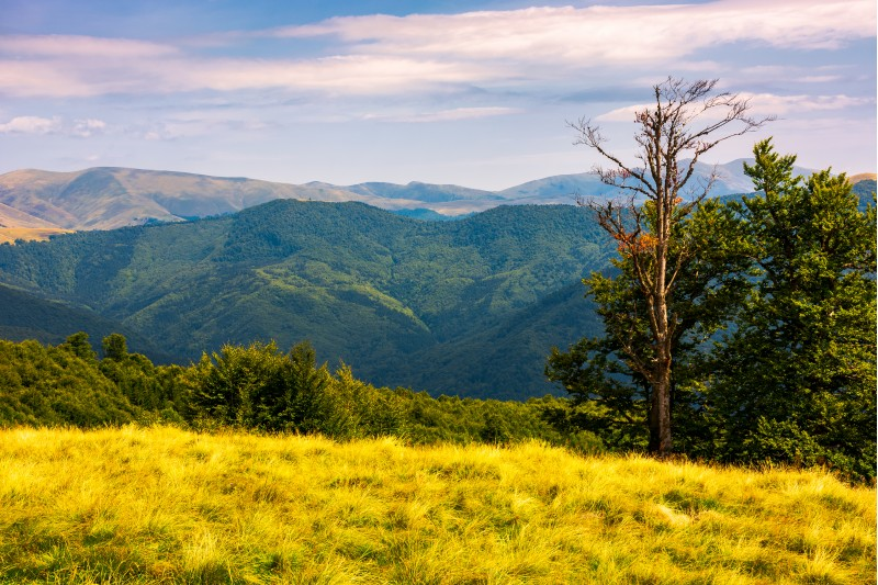 trees on a hillside with mountains in the distance. beautiful summer landscape of Svydovets mountain ridge, Ukraine
