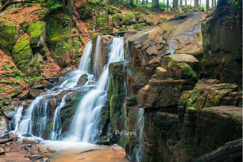 waterfall in the forest. beautiful spring scenery. water comes out of rocky cliff. wild rapid  stream. fallen foliage among trees and mossy rocks. bright and vivid nature background