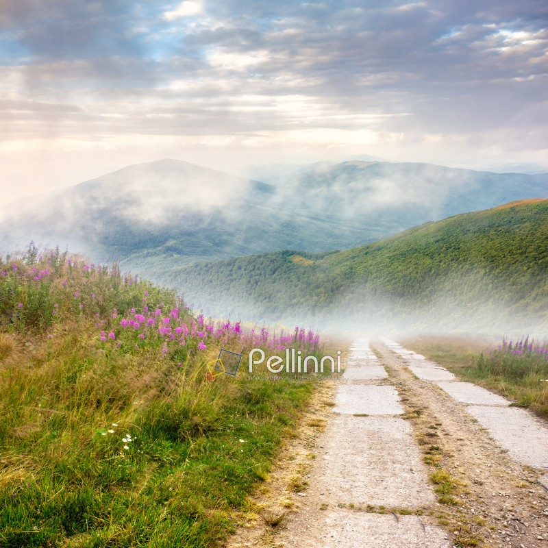 composite summer landscape with high wild grass and purple flowers in fog near the road on mountain hillside