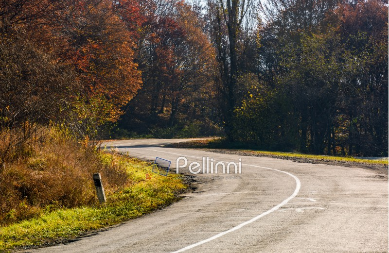 winding road through the forest with red foliage. beautiful autumn weather
