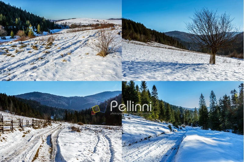 set of images with mountain spruce forest in winter landscape
