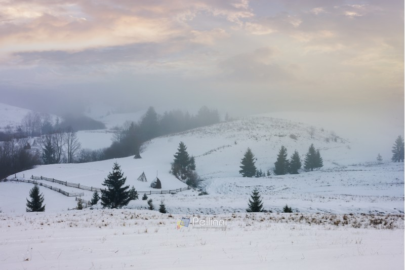 winter countryside on a foggy morning. mysterious scenery with trees on snowy slopes beneath a beautiful cloudy sky