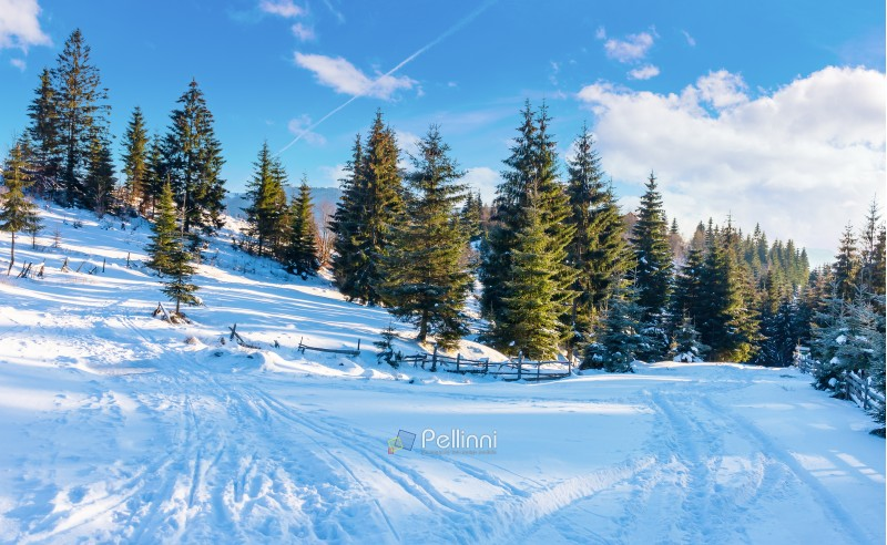 winter countryside with spruce forest. snow covered road in mountains. beautiful nature scenery on a bright day
