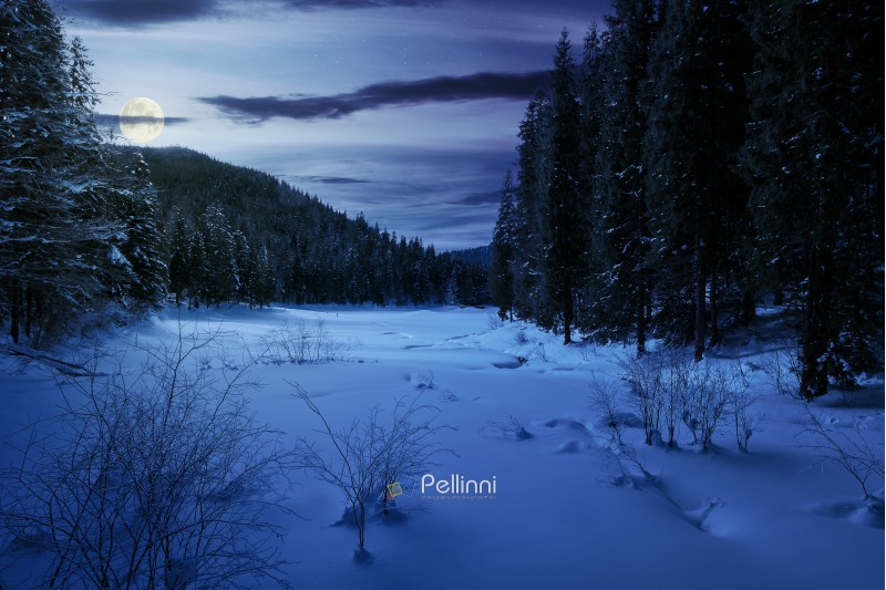 winter forest in mountains at night in full moon light. tall spruce trees around the snow covered meadow