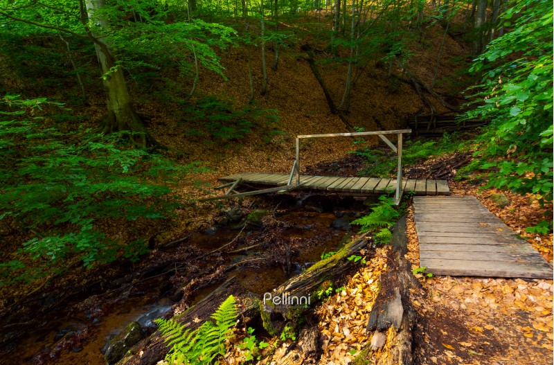 wooden bridge above the forest stream. lovely nature scenery in summer. beautiful ancient beech forest