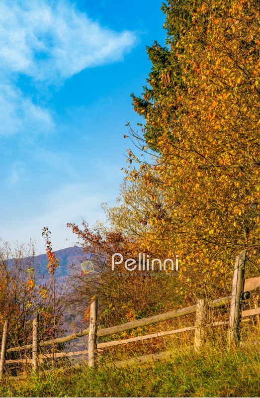 wooden fence near forest in mountains. lovely autumnal countryside nature background in the morning