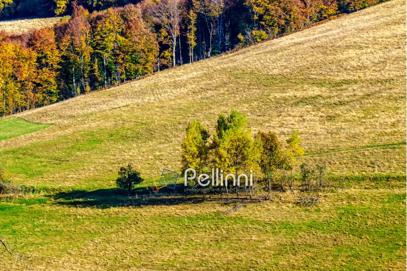 autumn yellow trees on hillside on background of mountain with coniferous forest at sunrise