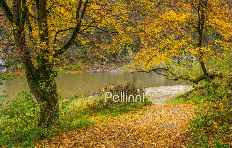 lovely autumnal scenery with yellow trees on rocky shore. river flows at the foot of a hill with rocky cliff