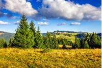 Classic Carpathian landscape. Autumn landscape in mountains of Romania. Conifer forest on hillsides in natural Carpathian mountain landscape of Apuseni National Park. Fresh and green trees of conifer forest in evening landscape