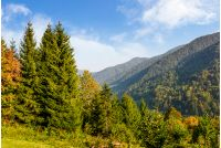 Forest on the hillside on Carpathian mountain ridge. Beautiful mountainous scenery in early autumn at sunrise